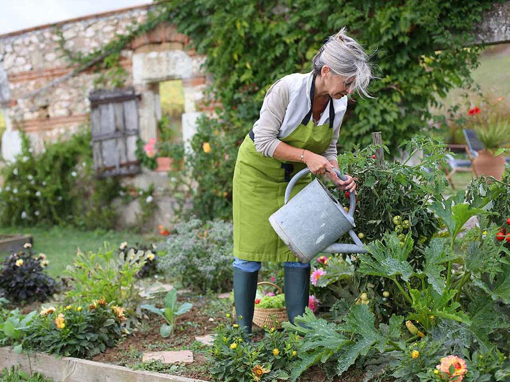 باغبانی و افزایش بهره وری